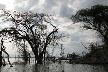 Kenia, ondergelopen rivier van Tineke Mols
