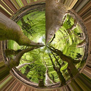 Bomen von Je Lo