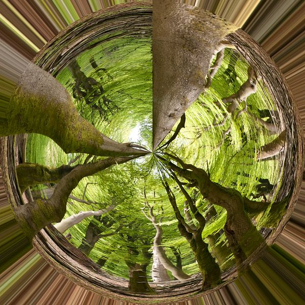 Bomen van Je Lo