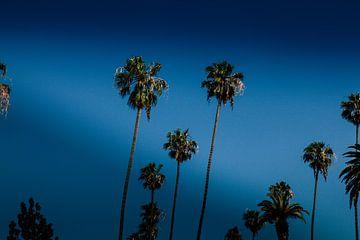 Palmbomen sur Pleuni van der Pas