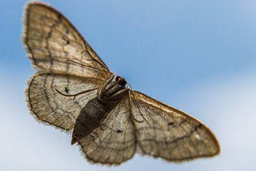 Vlinder van onderen gezien van Patrick Verhoef