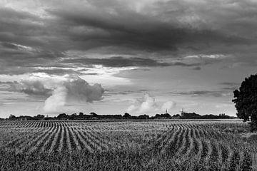 Linien im Maisfeld van Rolf Pötsch
