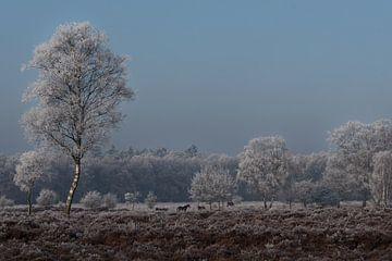 Winters landschap  met paarden op de Veluwe  von Cilia Brandts