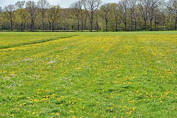Blumenwiese von Tjamme Vis
