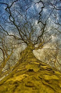 Magische boom van Edo van Kemseke