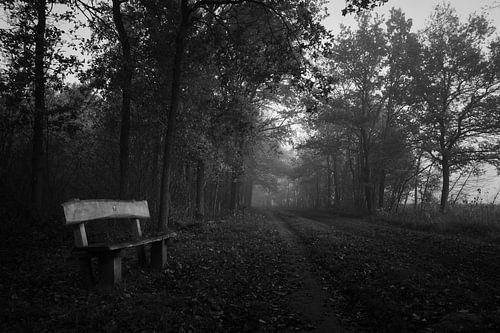 Wooden bench in an automn forest, black and white van Luis Fernando Valdés Villarreal Boullosa