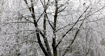 Winterwald von Thomas Jäger