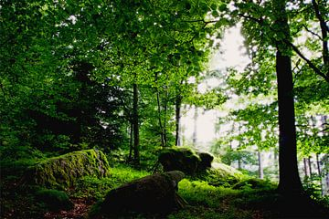 Betoverd bos van Jürgen Wiesler