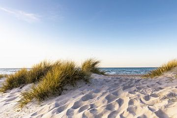 Sanddüne am Meer von Werner Reins