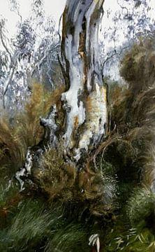 Paysage australien eucalyptus blanc sur KB Prints