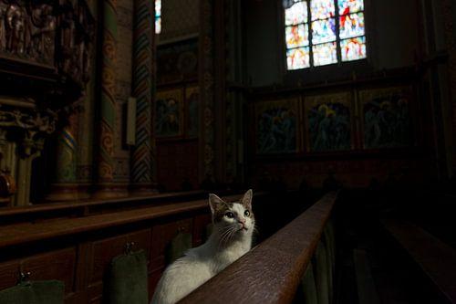 Poes in kerkbank van