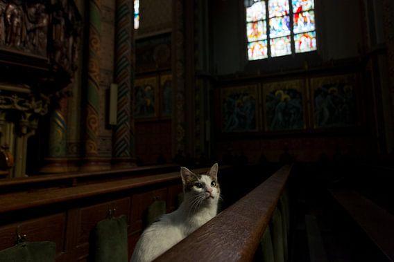 Poes in kerkbank van Robert van Willigenburg