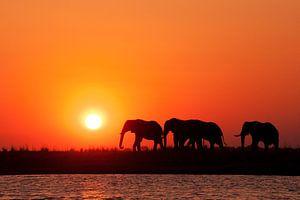 Afrikaanse zonsondergang Botswana van