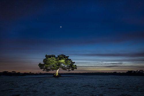 De verlichte boom van