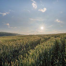 Sonnenaufgang in einem Maisfeld von John van de Gazelle