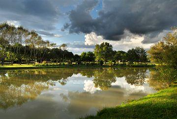 Wasser reflektierende Bäume von Corinne Welp