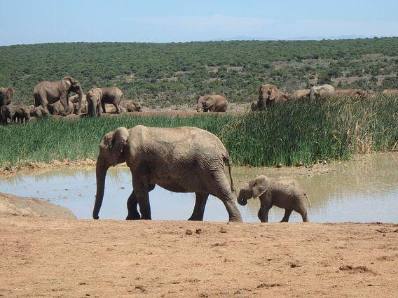Moeder en baby olifant