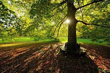 forever autumn van Dirk van Egmond