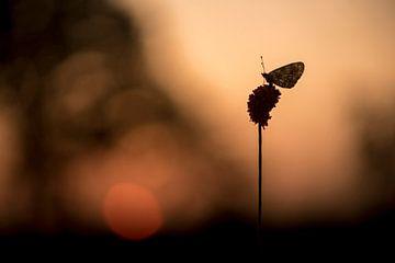 Zilveren Maan bij zonsopgang von Erik Veldkamp