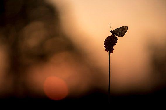 Zilveren Maan bij zonsopgang van Erik Veldkamp