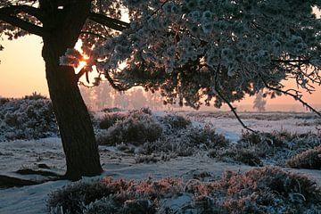 Zonsopkomst op de heide, warm licht op een koude morgen von J.A. van den Ende
