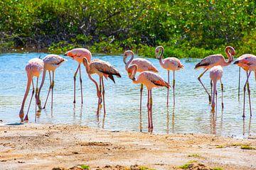 Flamants sur Bonaire sur Michel Groen