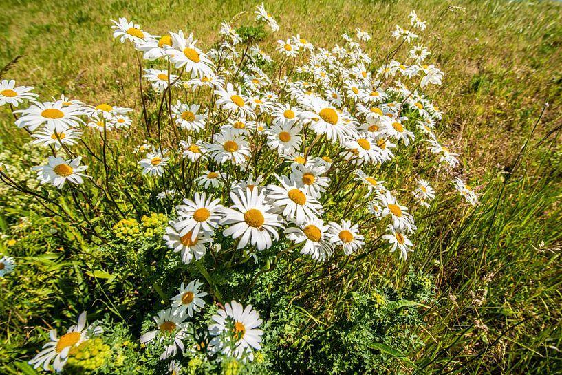 Wilde Bloemen op de Dijk van Brian Morgan