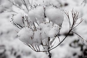 Winter van Angela Wouters