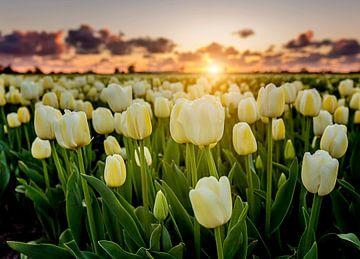 Zonsondergang tussen de witte tulpen sur Costas Ganasos