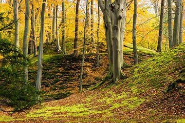 Herfst in het bos sur