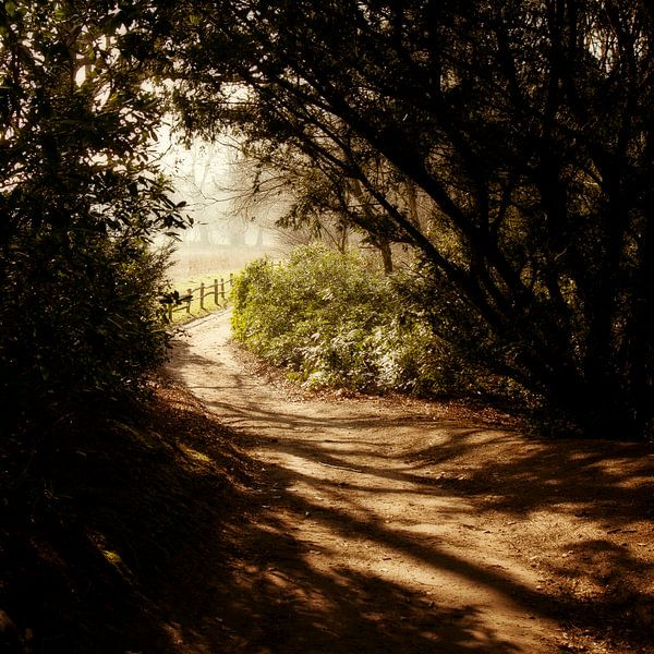 Horsten bospad van PAM fotostudio