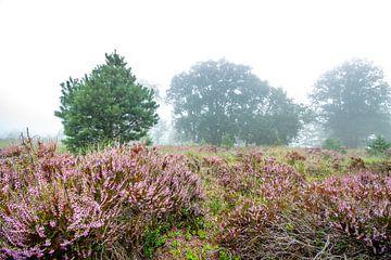 Heide im Nebel von Johan Honders