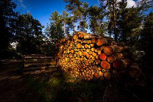 Gestapelde omgehakte boomstammen belicht door de zon