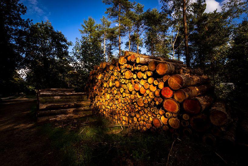 Gestapelde omgehakte boomstammen belicht door de zon van Bart van Dam