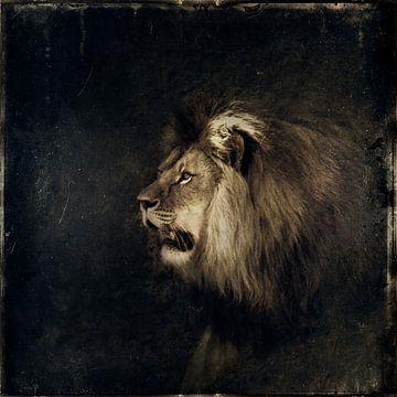 Lion sur Dirk Wüstenhagen