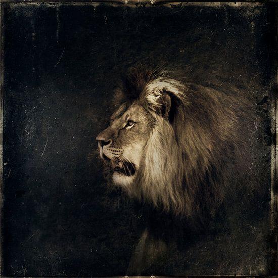 Lion van Dirk Wüstenhagen