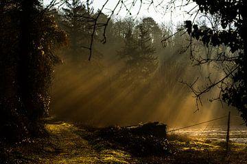 De ochtend zonneschijn in het bos van Ramon Van Gelder