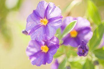 Paarse bloem van Stefanie de Boer