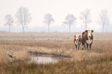 Koe en kalf sur Petra De Jonge