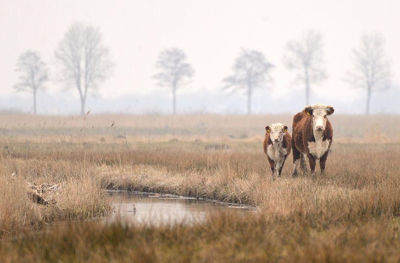 Koe en kalf van Petra De Jonge