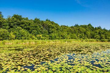 Landschaft mit See nahe Templin von Rico Ködder