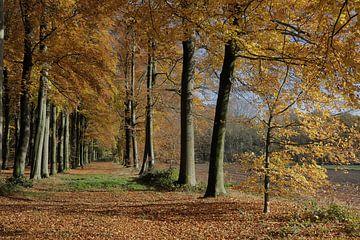Laantje bij kasteel Pietersheim - Lane near Pietersheim Castlele van Ton Reijnaerdts