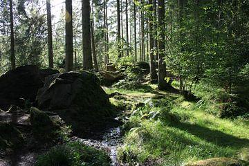 Wald in Schottland von Floortje Mink