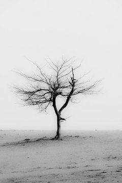 eenzame boom van eric brouwer