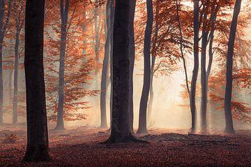 Rood sprookjesachtig herfst bos van Rob Visser
