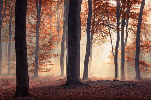 Rood sprookjesachtig herfst bos van