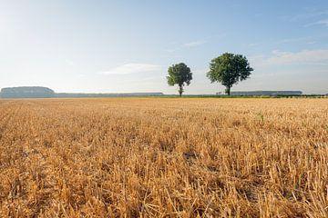 Großes Stoppelfeld nach der Ernte des Getreides von Ruud Morijn