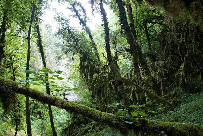 Regenwoud van Bas Smit