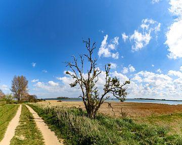 Feldweg entlang der Küste bei Glutzow, Insel Rügen von GH Foto & Artdesign