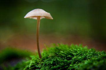 Lonely Mushroom von Dennis Claessens